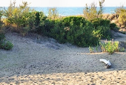 Spiaggia privata appartamenti vacanza sul mare vacanze toscane marina di castagneto carducci
